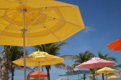 Colorful umbrellas. Brightly colored beach umbrellas with palm trees Royalty Free Stock Images