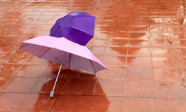Colorful umbrellas on the wet pavement Stock Image