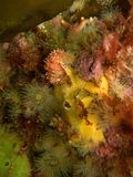 Colorful undersea flora Royalty Free Stock Photos