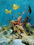 Colorful undersea view with corals and sea sponges Stock Photography