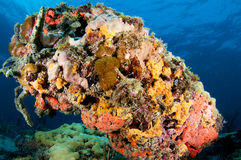 Colorful underside of coral outcropping. Royalty Free Stock Photos