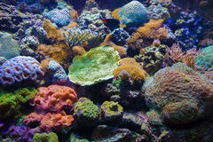 Colorful underwater flora Royalty Free Stock Photography