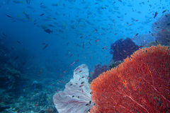 Colorful underwater landscape reef of Raja Ampat Papua Stock Photos