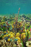 Colorful underwater life seabed of Caribbean sea Royalty Free Stock Photography