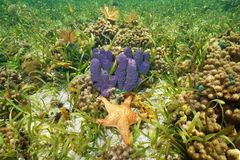 Colorful underwater life with sponge and starfish Royalty Free Stock Photo