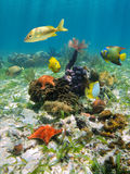 Colorful underwater marine life Royalty Free Stock Image