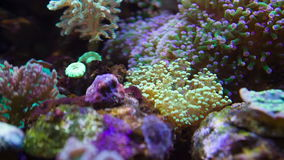 Colorful Underwater plants. Tropical undrewater plants without fishes stock footage