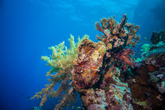 Colorful underwater reef with coral and sponges Stock Image
