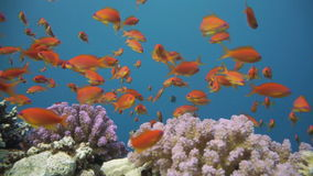 Colorful underwater reef with coral and sponges stock video