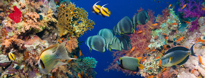 Colorful underwater reef with coral and sponges Royalty Free Stock Photography