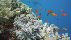 Colorful underwater reef with coral and sponges stock video footage