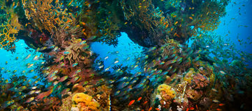 Colorful underwater reef with coral and sponges Stock Photo
