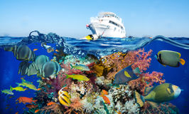 Colorful underwater reef with coral and sponges Stock Images