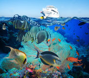 Colorful underwater reef with coral and sponges Stock Photos