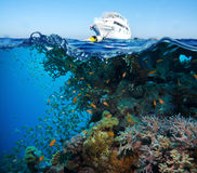 Colorful underwater reef with coral and sponges Stock Photography