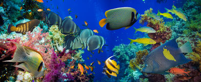 Free Colorful Underwater Reef With Coral And Sponges Stock Photos - 54725333