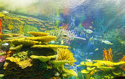 Colorful underwater scene Royalty Free Stock Photography