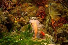 Colorful underwater scene Stock Photos