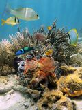 Colorful underwater scenery in the Caribbean sea Stock Photography