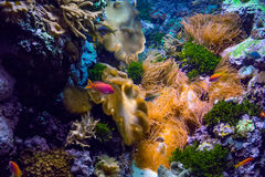 Colorful  underwater  sea world Stock Photo