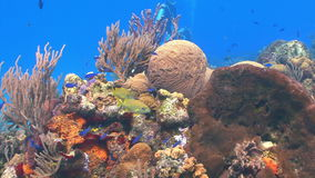 Colorful underwater seascape. Video of colorful underwater seascape stock video footage