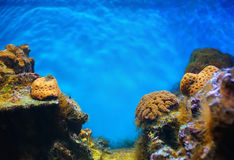 Colorful underwater world Stock Photos
