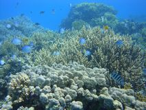 Colorful underwater world of the Red sea stock photo