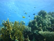 Colorful underwater world of the Red sea. stock photo