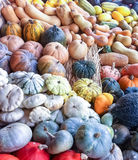 Colorful variation of pumpkins. Different kinds of colorful pumpkins lying on display Stock Images