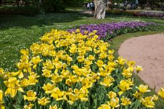 Colorful and variegated tulips flowers in the botanical garden of Villa Taranto in Pallanza, Verbania, Italy. Colorful and variegated tulips flowers in the Royalty Free Stock Image