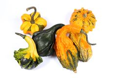 Colorful varieties of pumpkins, gourds and squashes stock images