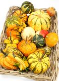Colorful varieties of pumpkins, gourds and squashes on a white background stock photos