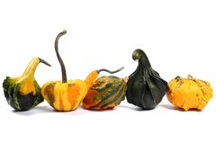 Colorful varieties of pumpkins, gourds and squashes on a white background royalty free stock images