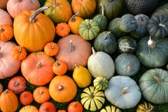 Colorful varieties of pumpkins and squashes Royalty Free Stock Images