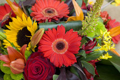 Colorful variety of flowers Stock Images
