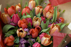 Colorful variety of flowers Stock Photography