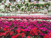 Colorful variety of flowers in a garden center Stock Photo