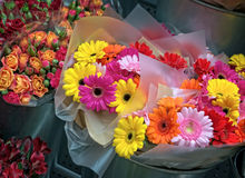 Colorful variety of flowers Royalty Free Stock Images