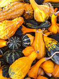 Colorful variety of gourds and squashes Stock Photo