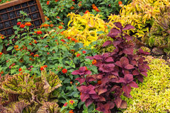 Colorful variety of plants in a garden Stock Image