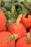 Colorful variety of pumpkins and squash stock photo