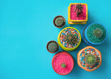 Colorful of various cactus with copy space. Top view of various colorful cactus with copy space Royalty Free Stock Image