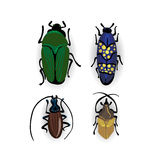 Colorful vector drawing of small beetles. Insect isolated on the white background. Cartoon insect bug icon Royalty Free Stock Photos