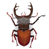 Colorful vector drawing of stag beetle. Stock Photography