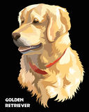 Colorful Vector Golden retriever. Colorful  isolated vector portrait  of dog Golden retriever on black background Royalty Free Stock Photos