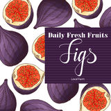 Colorful vector illustration. Food design with fruit. Hand drawn sketch of figs. Organic fresh product for card or poster design  Royalty Free Stock Photo