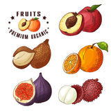 Colorful vector illustration. Food design with fruits. Hand drawn sketch of nectarine, ita palm, orange, figs, yumberry Royalty Free Stock Image