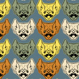 Colorful vector pattern with  illustration of angry bat Royalty Free Stock Photography