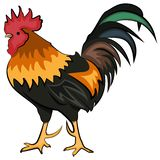 Colorful vector rooster vector illustration