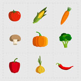 Colorful Vegetable Icon Set on White Background Royalty Free Stock Photos
